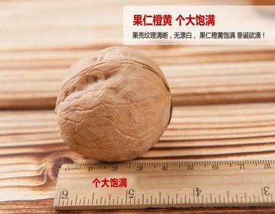 广东深圳福田区薄皮核桃