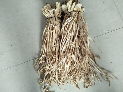 辽宁葫芦岛绥中县萝卜条 15~20cm
