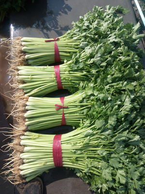 山东省泰安市新泰市玻璃脆芹菜 60cm以上 0.5斤以下