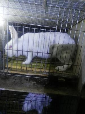 广东省广州市增城区兔肉类 新鲜