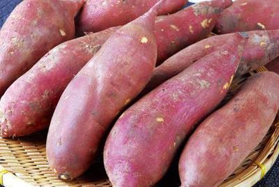 辽宁锦州凌海市早丰红薯 红皮 3两以上