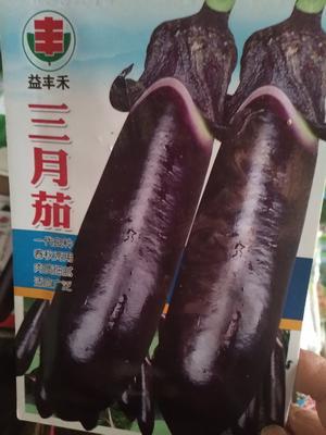 江苏省宿迁市沭阳县茄子种子