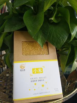 山西长治城区黄金米