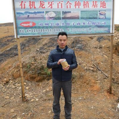湖南怀化靖州苗族侗族自治县龙山百合 双头
