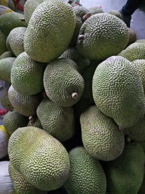 广西崇左凭祥市越南菠萝蜜 10-15斤