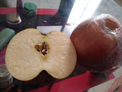 山西运城盐湖区红富士苹果 膜袋 日晒面 75mm以上