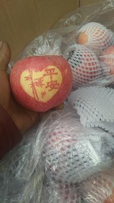 河北石家庄新乐市花牛苹果 光果 全红 80mm以上