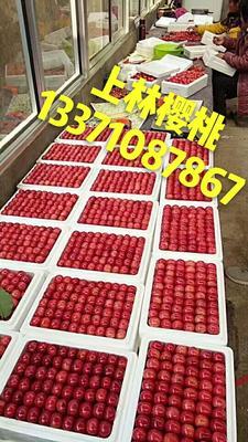 山东潍坊临朐县大樱桃 22-24mm 8-12g