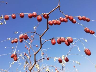 新疆阿拉尔阿拉尔若羌红枣 一级