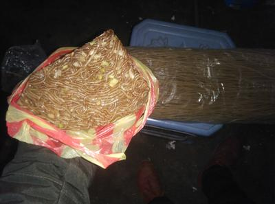 河北邯郸磁县红薯粉皮冻 6-12个月