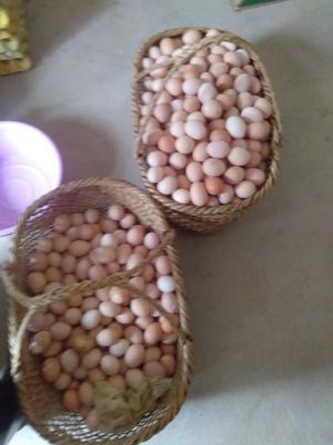 安徽池州青阳县草鸡蛋 食用 箱装