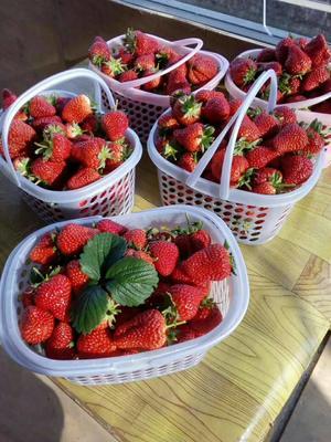 甘肃白银会宁县红颜草莓 20克以上