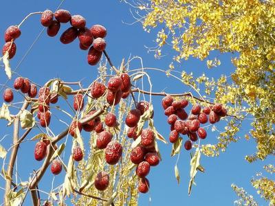 新疆阿拉尔阿拉尔若羌红枣 二级