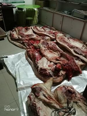 河南焦作修武县黑土猪 100斤以上