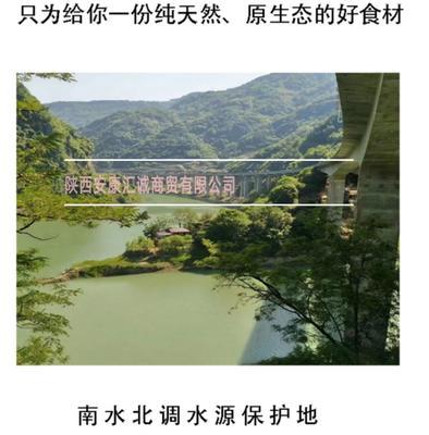 陕西安康汉滨区椴木菇 袋装 1年以上
