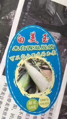 云南西双版纳景洪市牛奶玉米 1% 鲜货