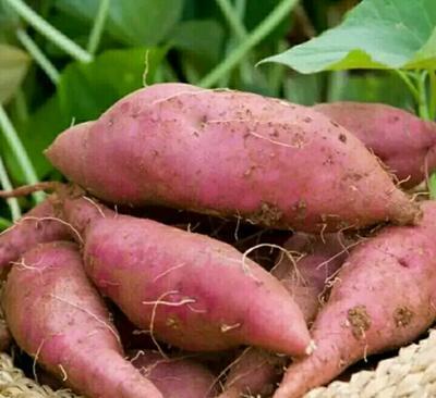 河南许昌襄城县红心红薯 红皮 8两~1.2斤