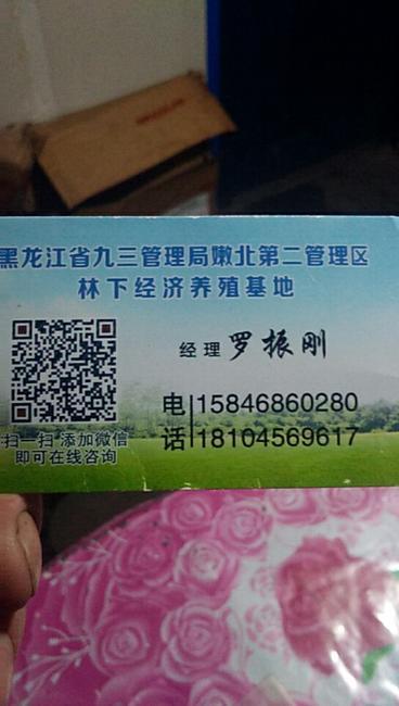 草原红公鸡 公 6~9月 全散养 4-5斤