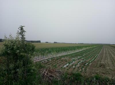 这是一张关于红衣花生 干货 花生米的产品图片