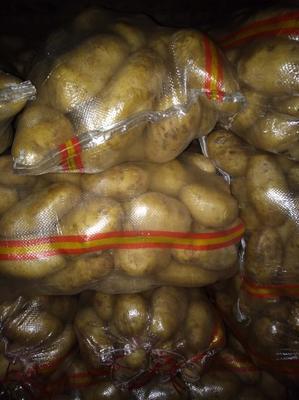 内蒙古呼和浩特武川县夏坡蒂土豆 3两以上