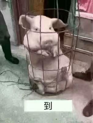 黑龙江佳木斯桦南县土杂猪 200-300斤