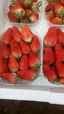 山东青岛平度市甜宝草莓 40克以上