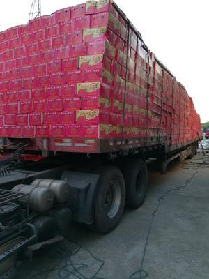 江苏徐州鼓楼区红香酥梨 100-150g 55mm以上