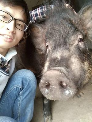 江西抚州崇仁县特种野猪 200-300斤 母