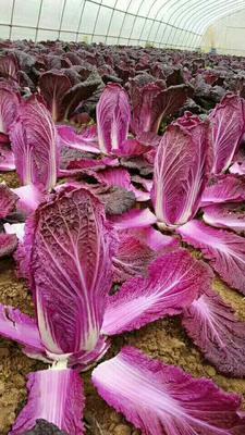这是一张关于紫白菜 2~3斤 净菜的产品图片