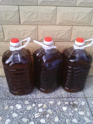 这是一张关于现榨山茶油 500ml的产品图片