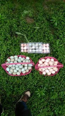 湖南长沙浏阳市土鸡蛋 食用 箱装