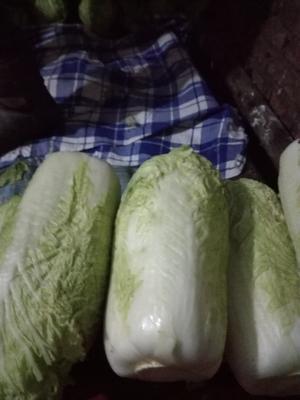 黑龙江省哈尔滨市阿城区北京三号大白菜 3~6斤 净菜