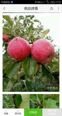 陕西咸阳礼泉县秦冠苹果 光果 片红 75mm以上