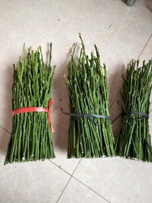 这是一张关于柑桔枝条 20~25cm的产品图片