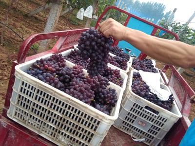 这是一张关于A17葡萄 5%以下 1次果 1.5- 2斤的产品图片