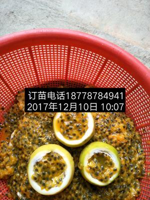 这是一张关于黄金百香果种子的产品图片