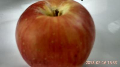 山西运城夏县红富士苹果 膜袋 表光 80mm以上