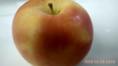山西运城夏县红富士苹果 膜袋 片红 90mm以上
