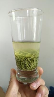 河南信阳浉河区炒青茶 散装 一级