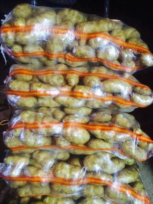 新疆乌鲁木齐沙依巴克区紫花白土豆 2两以上