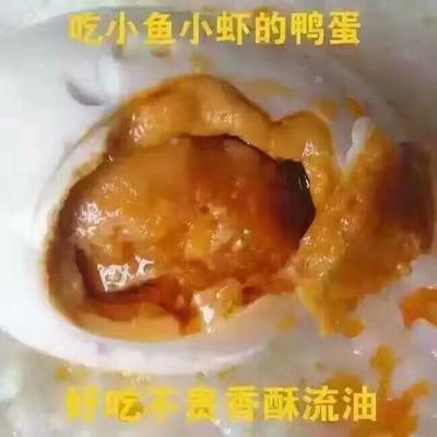 广西北海合浦县海鸭蛋 食用 箱装