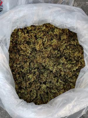 广西南宁西乡塘区海南黄花梨叶茶 盒装 恒温长期保存 一级