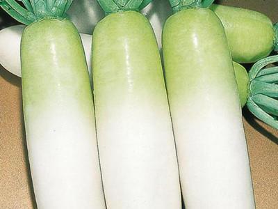 贵州毕节威宁彝族回族苗族自治县白萝卜 1~1.5斤