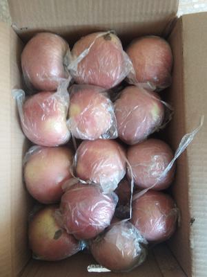 这是一张关于红富士苹果 膜袋 条红 75mm以上的产品图片