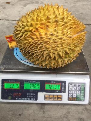 广东广州白云区猫山王榴莲 80 - 90%以上 3 - 4公斤