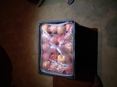 陕西渭南大荔县红富士苹果 纸袋 全红 75mm以上