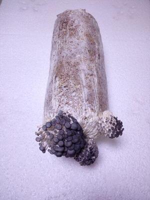 四川宜宾宜宾县蘑菇