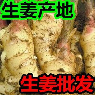 山东临沂沂水县姜种 带土 4两以上
