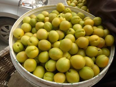 山东泰安新泰市珍珠油杏 40-45mm