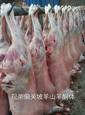 山西忻州忻府区羊肉类 生肉